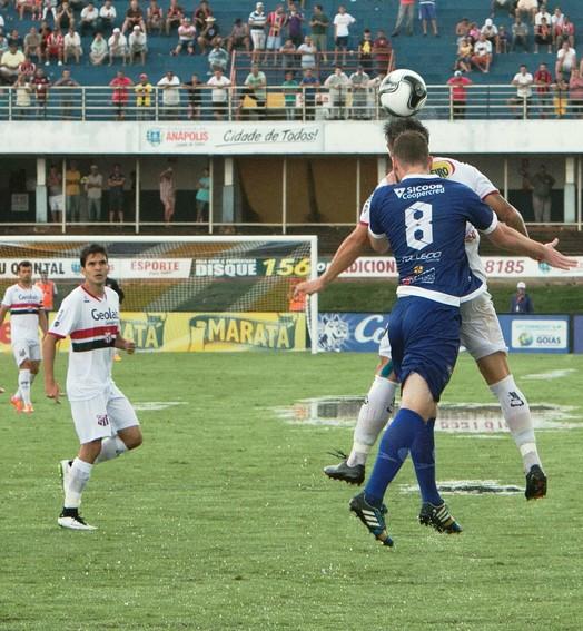 galo em alta (Anápolis FC)