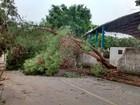 Chuva com ventos fortes causa queda de árvores no Vale do Aço