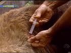 Raiva bovina já matou 4 mil animais no RS em 2013, diz secretaria