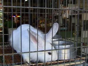 Venda de coelhos aumenta na páscoa em Araxá (Foto: Reprodução/TV Integração)