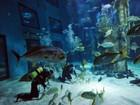 Mergulhadores recolhem dentes de tubarões em aquário de Londres