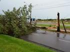 Chuva forte provoca alagamentos e quedas de árvores no noroeste do PR