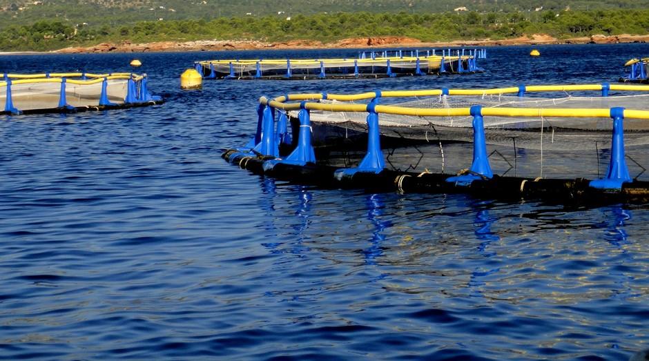Desafio será voltado à aquicultura (Foto: Divulgação)