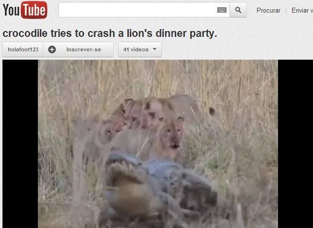 A imagem mostra o crocodilo fugindo do grupo de felinos, após uma tentativa frustrada de roubar a comida (Foto: Reprodução/YouTube)