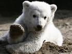 Zoológico de Berlim sacrifica mãe de famoso urso polar Knut
