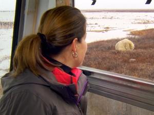 Renata Ceribelli observa ursos que convivem com moradores em Churchill, nos EUA (Foto: Reprodução)