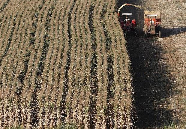 Colheitadeira trabalha em lavoura de milho em Santo Antônio do Jardim ; safra ; agronegócio ; agricultura ; (Foto: Paulo Whitaker/Reuters)