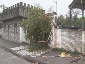 árvore cai em cima do portão de uma escola em São Vicente (Foto: Reprodução/TV Tribuna)