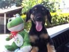 Centro de Zoonoses promove feira de adoção de animais nesta 6ª feira