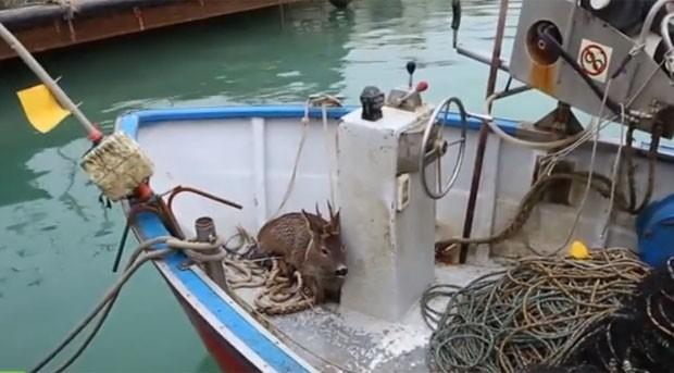 Pescador resgatou veado no mar Adriático (Foto: Reprodução/YouTube/RuptlyTV)