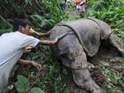 Tráfico de animais movimenta R$ 39 bilhões por ano no mundo, diz ONG