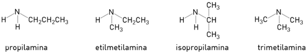 Quatro tipos de amina (Foto: Reprodução/UERJ)
