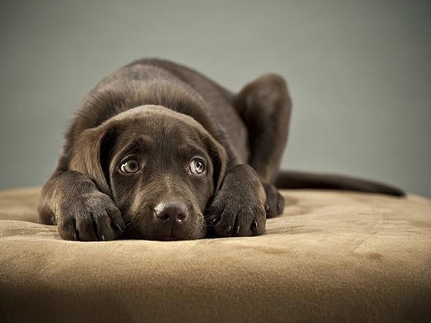 Cachorros têm uma audição apurada e sofrem em dias de jogos e festas, quando o barulho dos fogos toma a vizinhaça (Foto: Shutterstock)