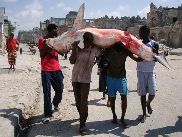 Em foto de 6 de abril de 2012, pescadores da Somália carregam tubarão capturado no Oceano Índico, próximo ao distrito de Hamarweyne, na capital Mogadíscio  (Foto: Mohamed Abdiwahab/AFP)