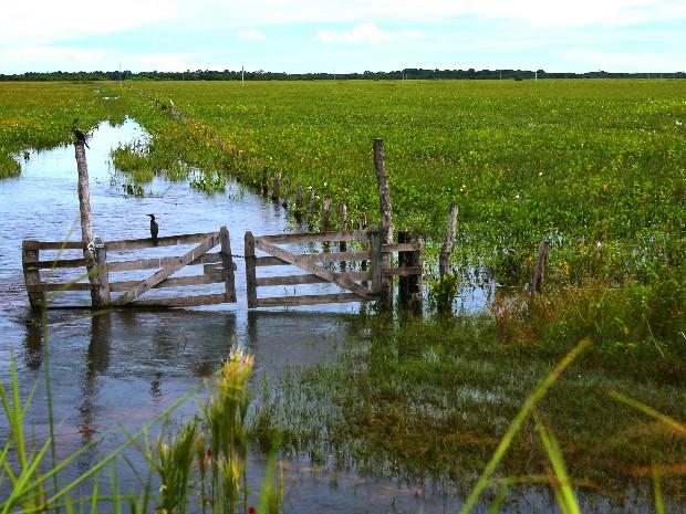 Propriedade alagada durante o ciclo de cheia do Pantanal em Mato Grosso do Sul (Foto: Nicoli Dichoff/Embrapa Pantanal)