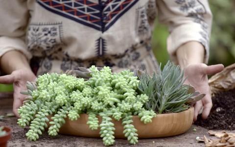 Aprenda a fazer um arranjo de plantas 'suculentas' lindas e resistentes ao sol