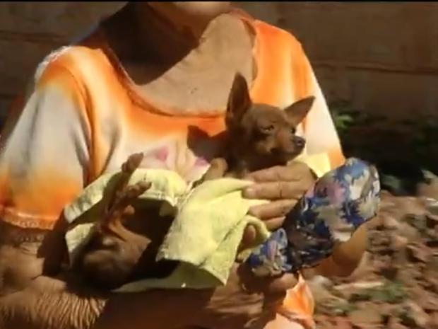 População de rua canina de Montes Claros tem preocupado CCZ e rede de cuidadores (Foto: Reprodução/Inter TV)