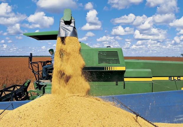 Produção de grãos da Bunge (Foto: Divulgação)