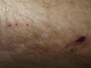 Cadela evitou estupro mordendo perna de agressor (Foto: Divulgação/ Polícia Civil Pilar do Sul)