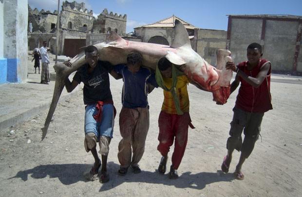 Em foto de 4 de novembro de 2011, pescadores carregam tubarão martelo pelas ruas de Mogadíscio (Foto: Farah Abdi Warsameh/AP)