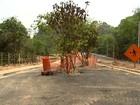 Prefeitura aprova retirada de árvores em avenida que homenageia Hebe
