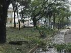 Granizo atinge estufas de campus de instituto federal em Muzambinho, MG