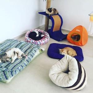 Alguns dos gatinhos da atriz (Foto: Arquivo Pessoal)