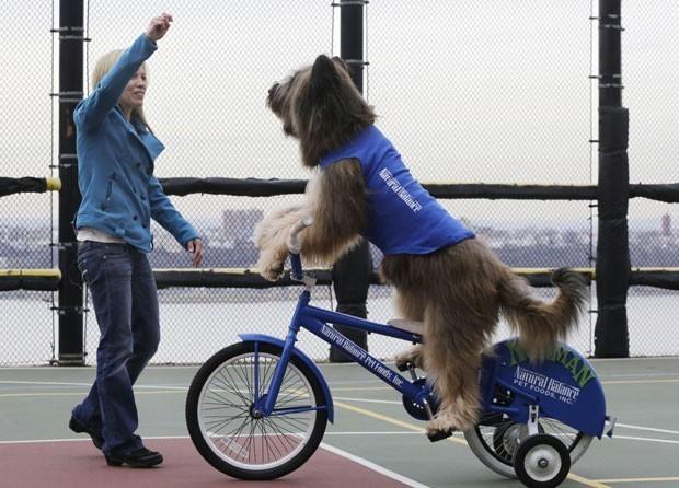 Animal aprendeu a praticar esportes com sua dona (Foto: Mark Lennihan/AP)