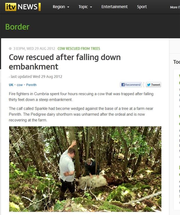 Vaca caiu dez metros antes de ficar presa em árvore. (Foto: Reprodução)