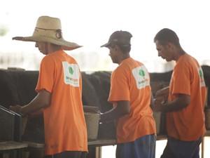 Detentos trabalham com produção de mudas em viveiro no interior de SP, dentro do presídio (Foto: Divulgação/Florestas Inteligentes)