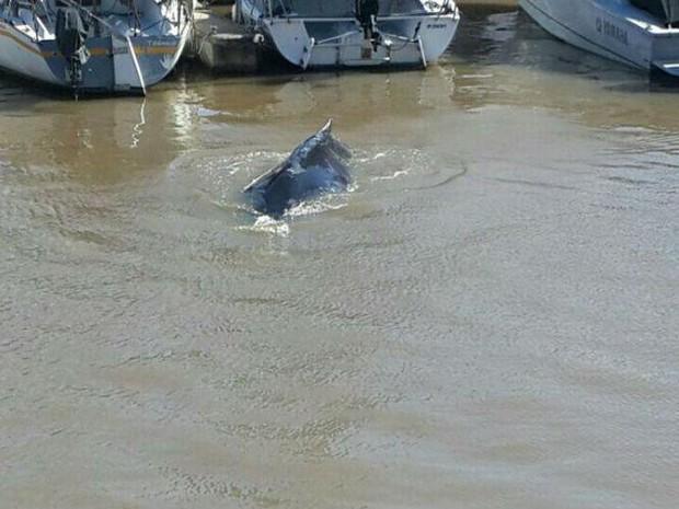Fotos da baleia de Puerto Madero começaram a circular em redes sociais  (Foto: Reprodução/Twitter/Mauricio N. SALDIVAR)