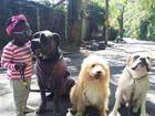 Giovanna Ewbank mostra clique fofo da filha, Titi, com cães da família