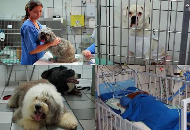 Guia da carreiras veterinária (Foto: Vanessa Fajardo/G1)