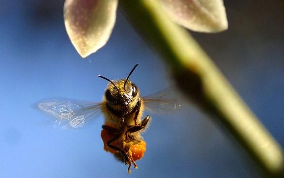 """No documentário """"Mais que Mel"""", o cineasta suíço Markus Imhoof acompanha a vida das abelhas e revela que elas correm risco de extinção (Foto: Divulgação)"""