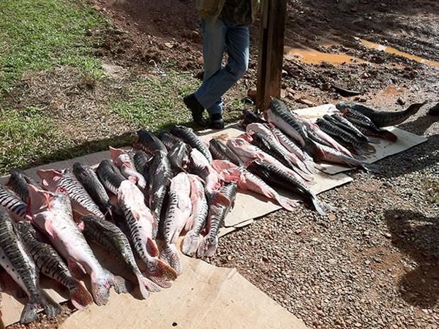 Homem fugiu depois de ser flagrado com pescado irregular. (Foto: Denise Soares/G1)