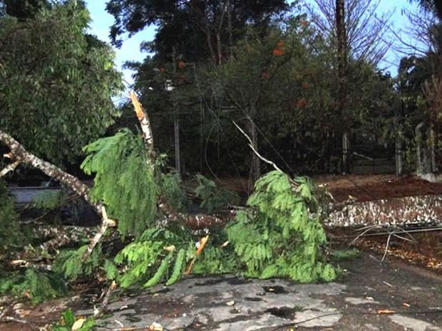 O vendaval também derrubou árvores nas ruas e avenidas (Foto: Clique Notícias)