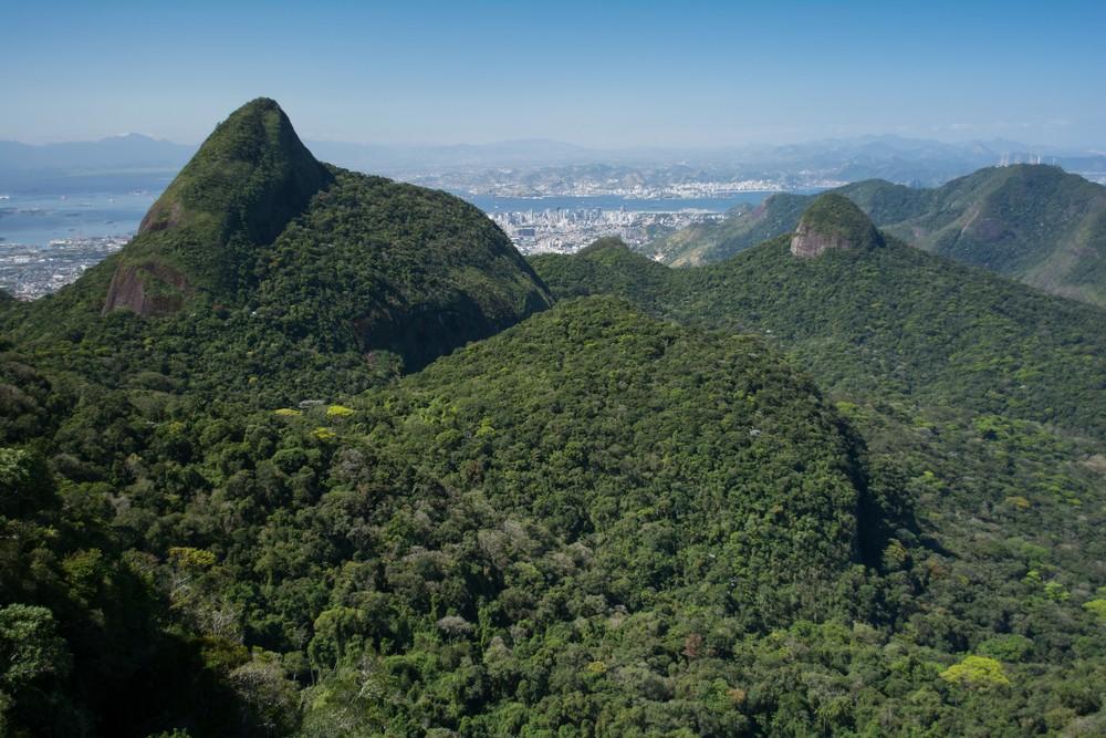 Pico do Papagaio, Floresta da Tijuca - RJ (Foto: Vitormarigo / Shutterstock)