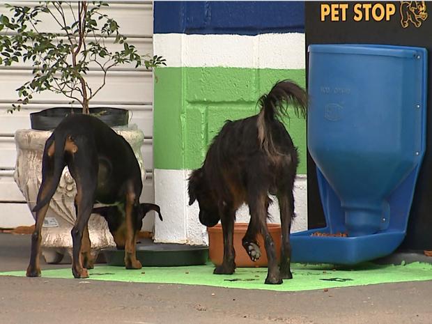 Cachorros podem se alimentam em cocho instalado em Dourado (Foto: Felipe Lazzarotto/ EPTV)