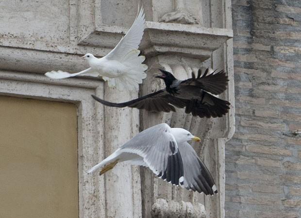 Um corvo também perseguiu a gaivota na Praça São Pedro, no Vaticano (Foto: Gregorio Borgia/AP)