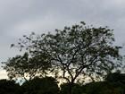 Quinta-feira será de sol e pancadas de chuva em MS, aponta Inmet