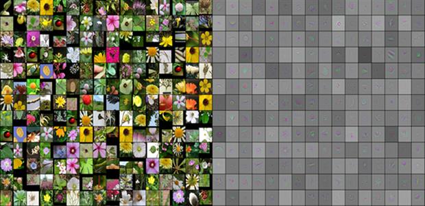 projeto-aplicativo-espécie-flores (Foto: Reprodução/Microsoft)