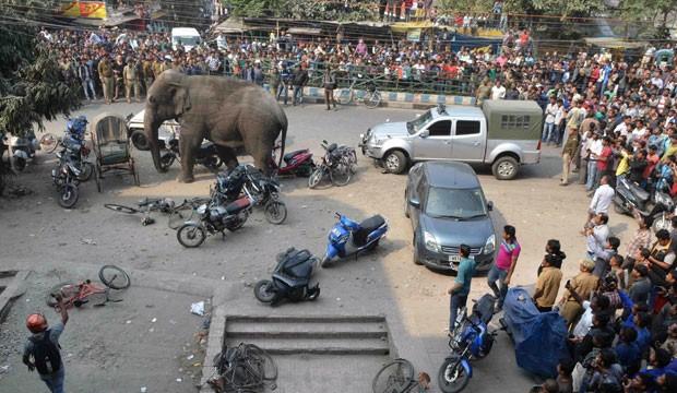 Elefante selvagem provocou caos ao invadir uma rua movimentada em Siliguri (Foto: Diptendu Dutta/AFP)