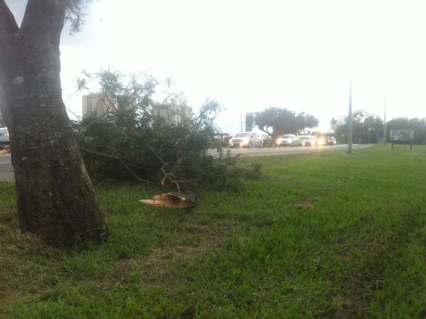 Galhos de árvores foram arrancados pela força do vento. (Foto: Letícia Bucker/ G1)