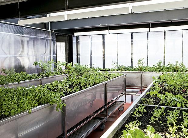 Escadas acima, a horta mantida pelos cozinheiros do Tuju fornece ao restaurante ervas essenciais na cozinha e plantas alimentícias não convencionais (Foto: Lufe Gomes/Editora Globo)