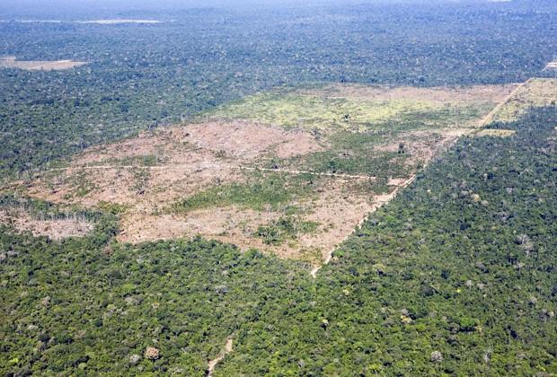 Região da floresta amazônica no Mato Grosso devastada para criação de pasto (Foto: Werner Rudhart/Arquivo/AFP)