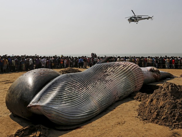 Baleia-de-bryde de mais de nove metros foi encontrada na popular praia de Juhu (Foto: Danish Siddiqui/Reuters)