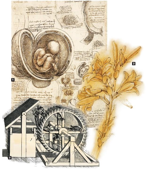 ESTUDOS DE LEONARDO 1. A representação até então inédita de um feto no ventre materno (c. 1510-1512) 2. Lírio- branco (c. 1472-1475), obra-prima do desenho botânico 3. O protótipo de uma máquina militar (sem data) baseada num moinho, resultado do estudo d (Foto: Getty Images, AP e divulgação)