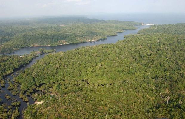 Área com desmate cresce 60% na Amazônia