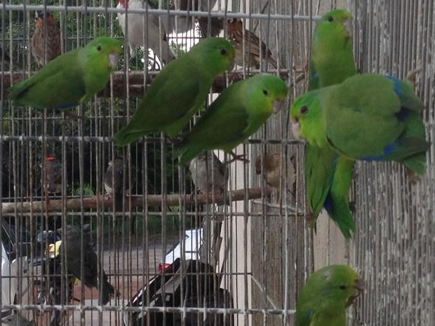 Aves foram apreendidas em uma feira livre de João Pessoa  (Foto: Walter Paparazzo/G1)
