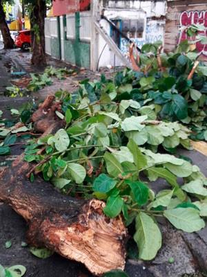 Árvore caiu no bairro da Pituba (Foto: Vanderson Nascimento/TV Bahia)